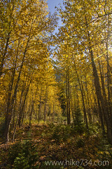 "Aspen Grove • <a style=""font-size:0.8em;"" href=""http://www.flickr.com/photos/63501323@N07/7454794092/"" target=""_blank"">View on Flickr</a>"