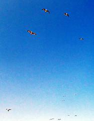 Comic Book Seagulls (TheJudge310) Tags: california ca blue sky usa seagulls birds america book flying comic unitedstates comicbook 2012 olympustg810