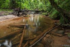 Fallen in the rainforest (Luke KC) Tags: vacation rainforest australia queensland cairns tropics fnq babinda farnorthqueensland babindaboulders