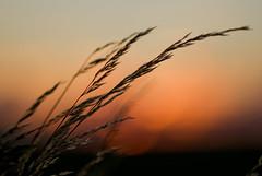 Warm Sunset (Danil) Tags: light sunset summer netherlands dutch licht zonsondergang warm nederland groningen zon landschap ezinge hollanbd danielbosma