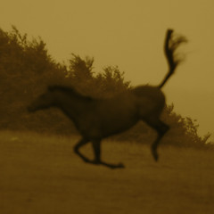Solzhenitsyn; memory (Timoleon Vieta II) Tags: portrait horse blur sepia happy dance dancing flight memory solzhenitsyn thelittledoglaughed timoleon