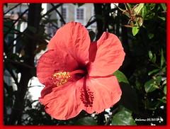 Jrez (Cdiz) 09 flor (ferlomu) Tags: flor cdiz jerez ferlomu