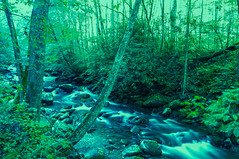 Babbling Brook Blue/Green (Kimberly Sue - IN) Tags: trees nature water forest rocks stream brook babblingbrook