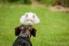Who are you? (Jan Brandt Madsen) Tags: dog animal denmark nikon 70200mm d300 rodovre capitalregionofdenmark lightroom4