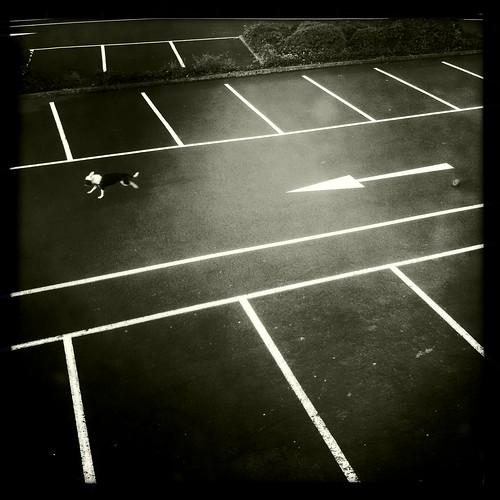 Dog and Car Park, Lewisham, July 2012