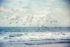 Soaring Ever Higher (pixelmama) Tags: ocean california sea painterly love beach clouds day cloudy kansas imperialbeach flockofbirds havingfun hcs carryonmywaywardson myhappyplace clichesaturday pixelmama whilesammystompsmykeyboard soaringeveryhigher