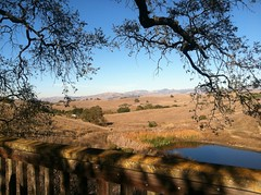Calero Wetlands Photo