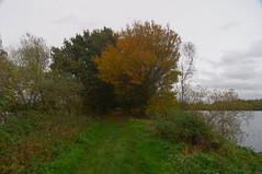 736-29L (Lozarithm) Tags: landscape paths kingsbury 1224 kx warks treesshrubs bodymoorheath justpentax pentaxzoom