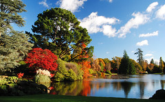 Autumn in Sheffield Park Gardens (Mark Wordy) Tags: autumn trees red lake leaves nationaltrust eastsussex autumncolour sheffieldparkgardens