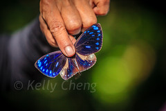 Taiwan-121113-267 (Kelly Cheng) Tags: travel color colour green tourism nature animals horizontal fauna butterfly daylight colorful asia day taiwan vivid colourful traveldestinations  northeastasia