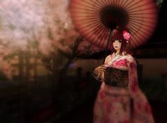 2016 Coordinate 60 (littlerowan) Tags: secondlife parasol geisha sakura obi yumyum angelica whiteface ambrosia updo tsg kanzashi tamayura lcky culco pinkfuel glamaffair thesugargarden creatorscollectionbox
