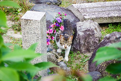 Today's Cat@2016-05-26 (masatsu) Tags: cat pentax catspotting mx1 thebiggestgroupwithonlycats