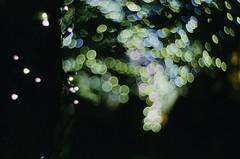 Bokeh (Shoji Kawabata. a.k.a. strange_ojisan) Tags: street new nightphotography light film japan night 35mm lens photography lights photo xpro lomography bokeh streetphotography slide 200 streetphoto nightphoto zenit filmphotography kenko filmphoto petzval kf1n