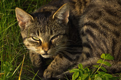 IMG_5811 (Lightcatcher66) Tags: florafauna makros katzencats lightcatcher66