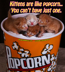 Popcorn kittens. (youtube.com/utahactor) Tags: lighting red orange cats pets cute animals yellow canon studio mackerel ginger blog eyes feline cinnamon stripes tabby tail small watch adorable like kittens follow professional meme gato website precious tiny popcorn newborn kitties gata cuteness subscribe youtube friendsofzeusandphoebe gingerkittiesfour