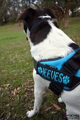 DSC_0044-1 (ScootaCoota Photography) Tags: rescue dog pet nature animal outdoors mutt mix bush collie labrador walk border trail