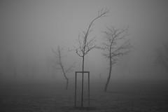 walking the dog (Mindaugas Buivydas) Tags: trees bw mist tree fog dark march spring mood moody darkness klaipeda lithuania lietuva klaipda humantouch