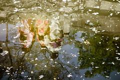 Reflection (p.fabian) Tags: japan jp  kimono spiegelung  japn refleccin kytoshi  kytofu japn