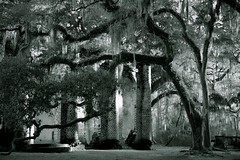 Old Sheldon (Marie.L.Manzor) Tags: trees blackandwhite bw abandoned church nature monochrome architecture landscape us oak ancient nikon ruins mood south southcarolina spanish mysterious erie tombs moos deepsouth oldsheldonchurch marielmanzor nikon610 oldshelton