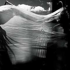 The cage (Dom Guillochon) Tags: life bird outside vent freedom movement shadows wind noiretblanc cage plastic sheet nuages oiseau humans ombres flown
