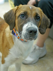 Dilly_02 (AbbyB.) Tags: dog pet animal newjersey canine doggy shelter shelterpet petphotography easthanovernj mtpleasantanimalshelter