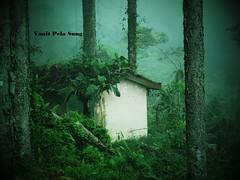 Taken away by nature (vanitpelasung) Tags: wood old building tree abandoned nature grass fog bush outdoor hill hut malaysia maxwell taiping bukit perak larut