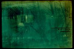 Exposicin multiple // Multiple exposure (Job Abril) Tags: trees film 35mm landscape room surreal palmtree analogphotography expiredfilm lastshot filmphotography surrealphotography
