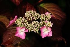 Flower (Hugo von Schreck) Tags: flower macro blume makro blte onlythebestofnature tamron28300mmf3563divcpzda010 canoneos5dsr hugovonschreck