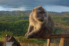 DSC02531 (Peripatete) Tags: bali mountains nature sunrise landscape volcano mount monkeys batur