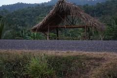 DSC01968 (numb3r) Tags: belize btb belizetourism wildlife rainforest mayan temples jungle belizezoo placencia belizecity authenticbelize tapir tucan