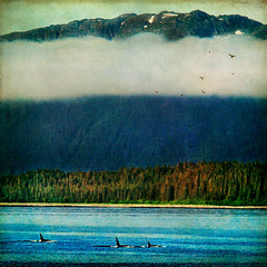 fiction was invented (1crzqbn) Tags: sunlight seascape mountains color nature square landscape textures 7d whales ie shining magicalmoments hypothetical fogbank hss vividimagination soulscapes artdigital idream shockofthenew innamoramento trolled anawesomeshot memoriesbook awardtree magicunicornverybest magicunicornmasterpiece exoticimage 1crzqbn sliderssunday netartii artcityart fictionwasinvented 15522012