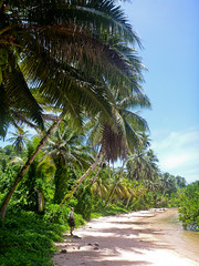 Kosrae, Micronesia (ebuechley) Tags: ocean island scenery fsm biology micronesia kosrae