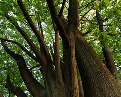 stritz-6188.jpg (jstritz) Tags: trees stritz fhsp
