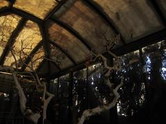 la salamandra (maximorgana) Tags: tree glass wall leaf crystal dry ceiling plastic cartagena lasalamandra