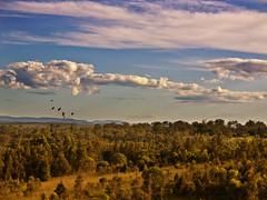 brisbane valley bush (Fat Burns ☮) Tags: landscape bush day cloudy brisbane brisbaneriver scrub brisbanevalley wivenhoe bestcapturesaoi