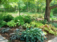 The Perfect Mix of Shade Garden Plants for Your Landscape