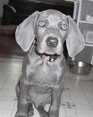 """Gus @ 9 weeks • <a style=""""font-size:0.8em;"""" href=""""http://www.flickr.com/photos/66999112@N00/7483606632/"""" target=""""_blank"""">View on Flickr</a>"""