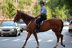Chicago Mounted Patrol (Tackshots) Tags: chicago police goldcoast mountedpatrol chestnutandrush