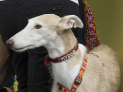 P1000992 (David Mena Gil) Tags: dogs lumix panasonic perros alava vitoria gasteiz vitoriagasteiz fueros apasos fz45 panasoniclumixdmcfz45