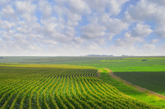 Nebraska landscape 07-25-2012