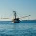 Shrimp Boats 6