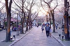 Japan Kyoto . . Gion .  DSC_7554 (Ming - chun ( very busy )) Tags: street travel light sunset japan cherry nikon kyoto blossom traditional scene   cherryblossom   gion nikkor f18  d800 streetshot    traveljapan streetsnap streetscence sukura