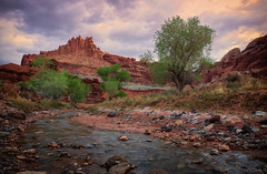 The Castle and Fremont River (Liz Reed Photography) Tags: water sunrise utah redrock capitolreefnationalpark thecastle fremontriver