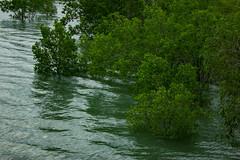 Floodet Mangroves (betadecay2000) Tags: plant island power outdoor australia darwin tags gas mangrove australien northern channel territory mangroven gaskraftwerk