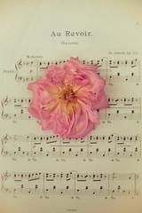 Au Revoir. (photoart33) Tags: pink music stilllife flower rose vintage aged goodbye aurevoir