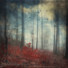 open woodland dreams (Dyrk.Wyst) Tags: blue schnee trees winter light red snow painterly blur cold rot texture nature wet leaves rain birds misty fog backlight clouds forest photomanipulation germany landscape deutschland licht mood nebel outdoor laub natur foggy silhouettes surreal peaceful atmosphere manipulation hike mystical wilderness kalt landschaft wald baretrees regen impressionistic stimmung gegenlicht lowangle quadratisch 2016 malerisch photoshelter vertorama bume atmosphre
