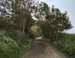The road to Clonque, Alderney (neilalderney123) Tags: road trees landscape olympus alderney clonque 2016neilhoward 2016neilhoward