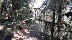 20160331_092906 (ks_bluechip) Tags: creek evans trails preserve sammamish usa2106