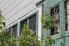 Ladew Topiary Gardens (karma (Karen)) Tags: flowers windows gardens blossoms maryland bushes monkton cafes lilacs ladewtopiarygardens harfordco