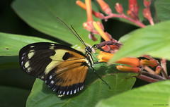 Butterfly 2016-55 (michaelramsdell1967) Tags: flowers light plant flower color green love beautiful beauty closeup butterfly bug garden insect photography hope photo spring nikon colorful natural vibrant butterflies vivid insects bugs zen upclose